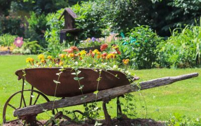 Soul food in your garden